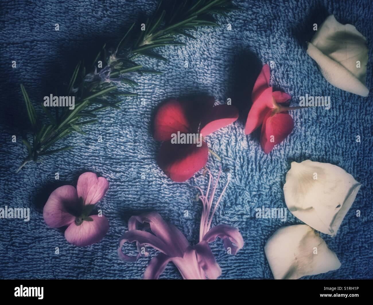 Nahaufnahme Blick auf die Blumen und Blüten Stockfoto