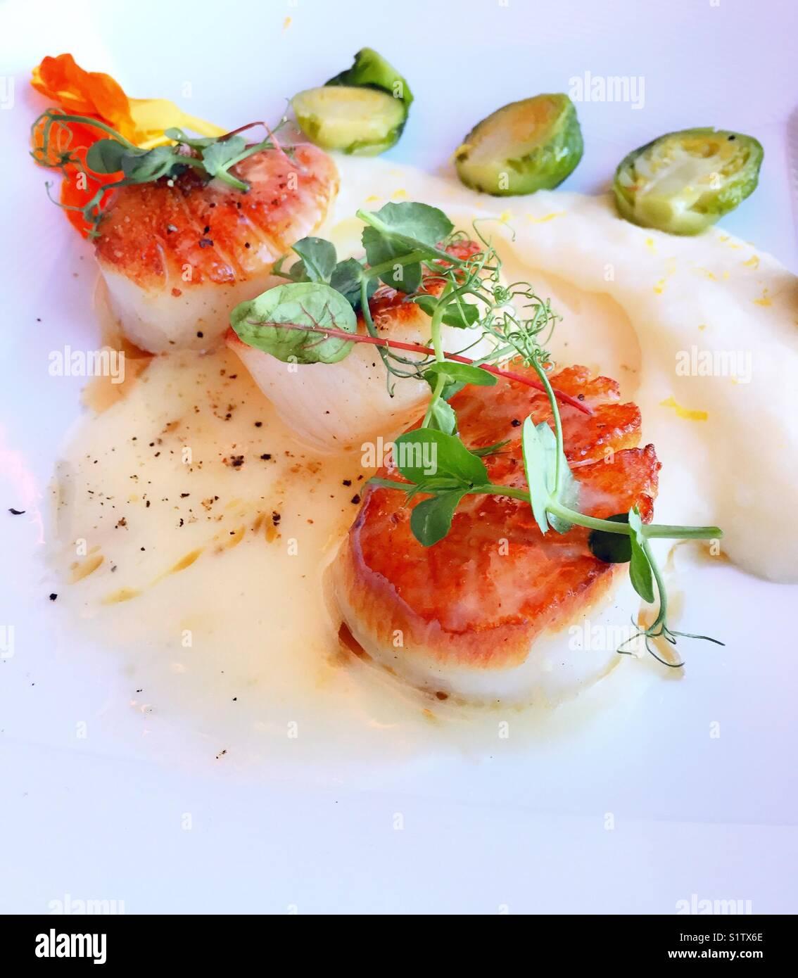 Geschmorte Jakobsmuschel entrée an upscale Gourmet Restaurant, New York City, USA Stockbild