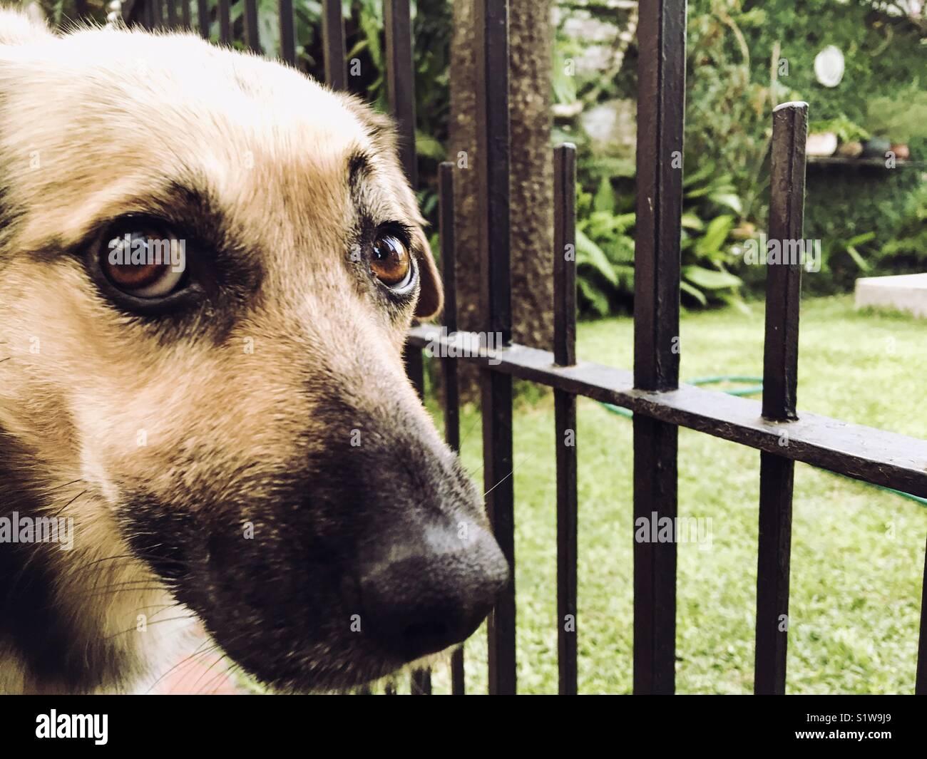 Niedlichen Hund Suchen Durch Den Zaun Im Garten Stockfoto Bild