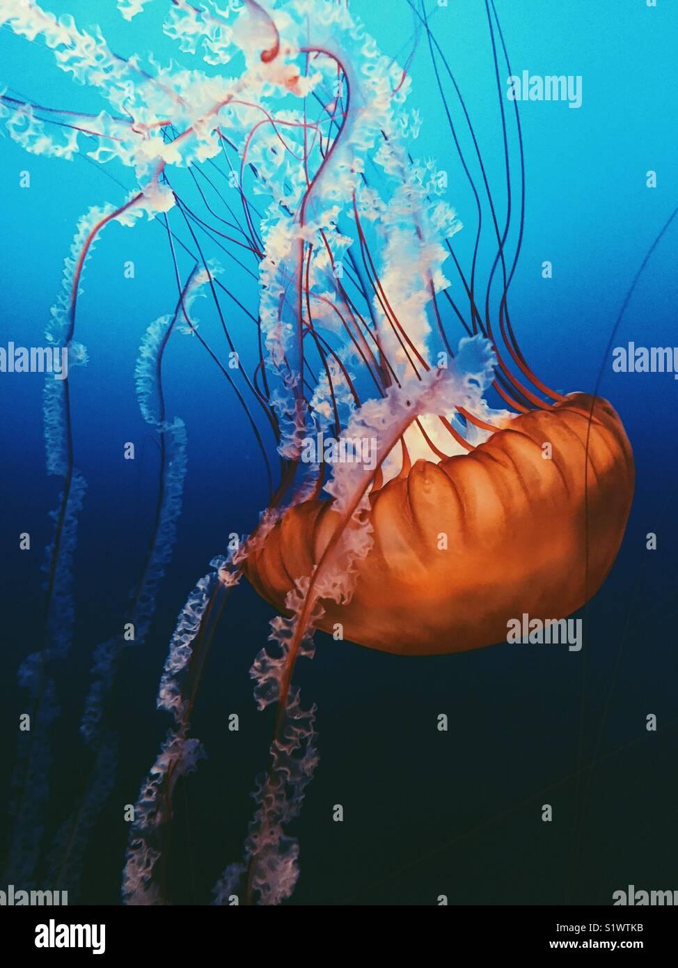 Eine Kreatur des Meeres Stockbild