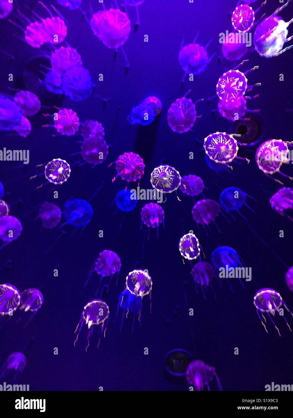 Erstaunlich Leuchten bis in Twin Towns Queensland Stockbild