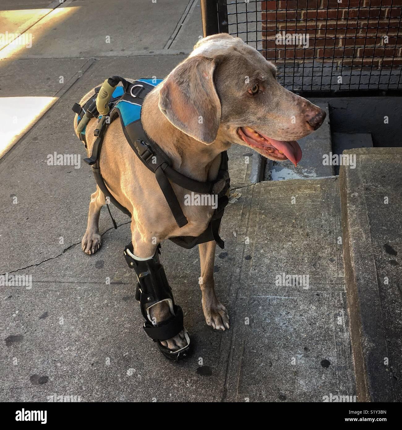Gips gebrochen hund bein Beinbruch beim