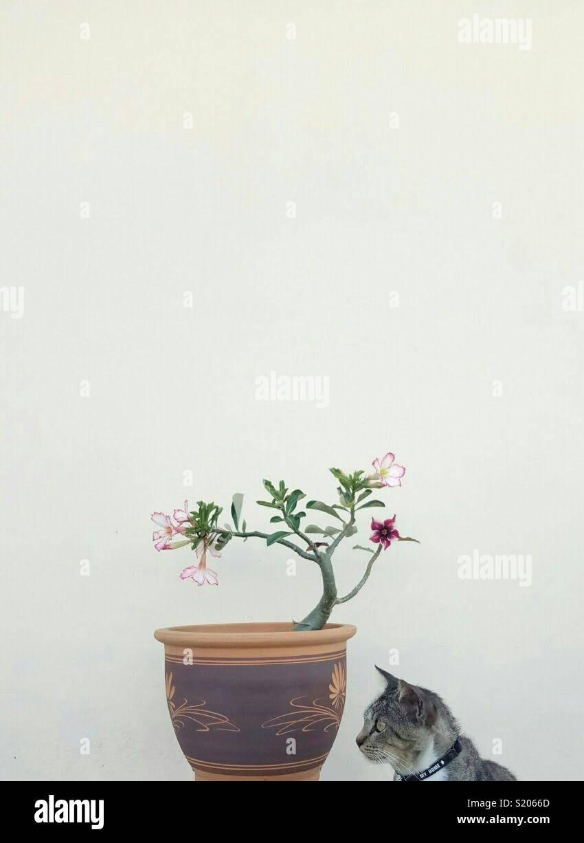 Von Meizu M3 zur Kenntnis genommen Stockbild