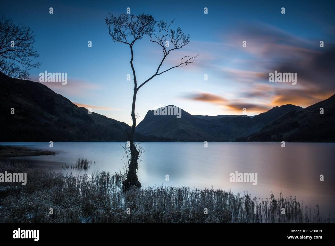 Einsamer Baum im Buttermere im englischen Lake District Stockbild