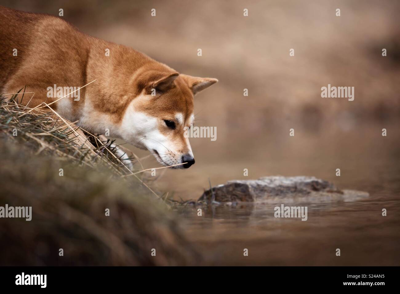 Frösche & Hunde Stockbild