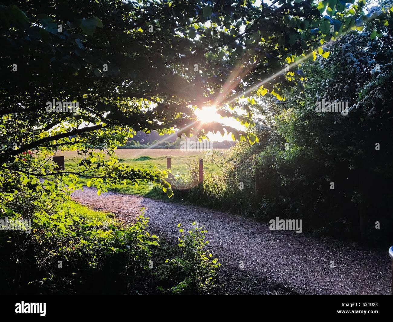 Country Park Spaziergang bei Sonnenuntergang Stockbild