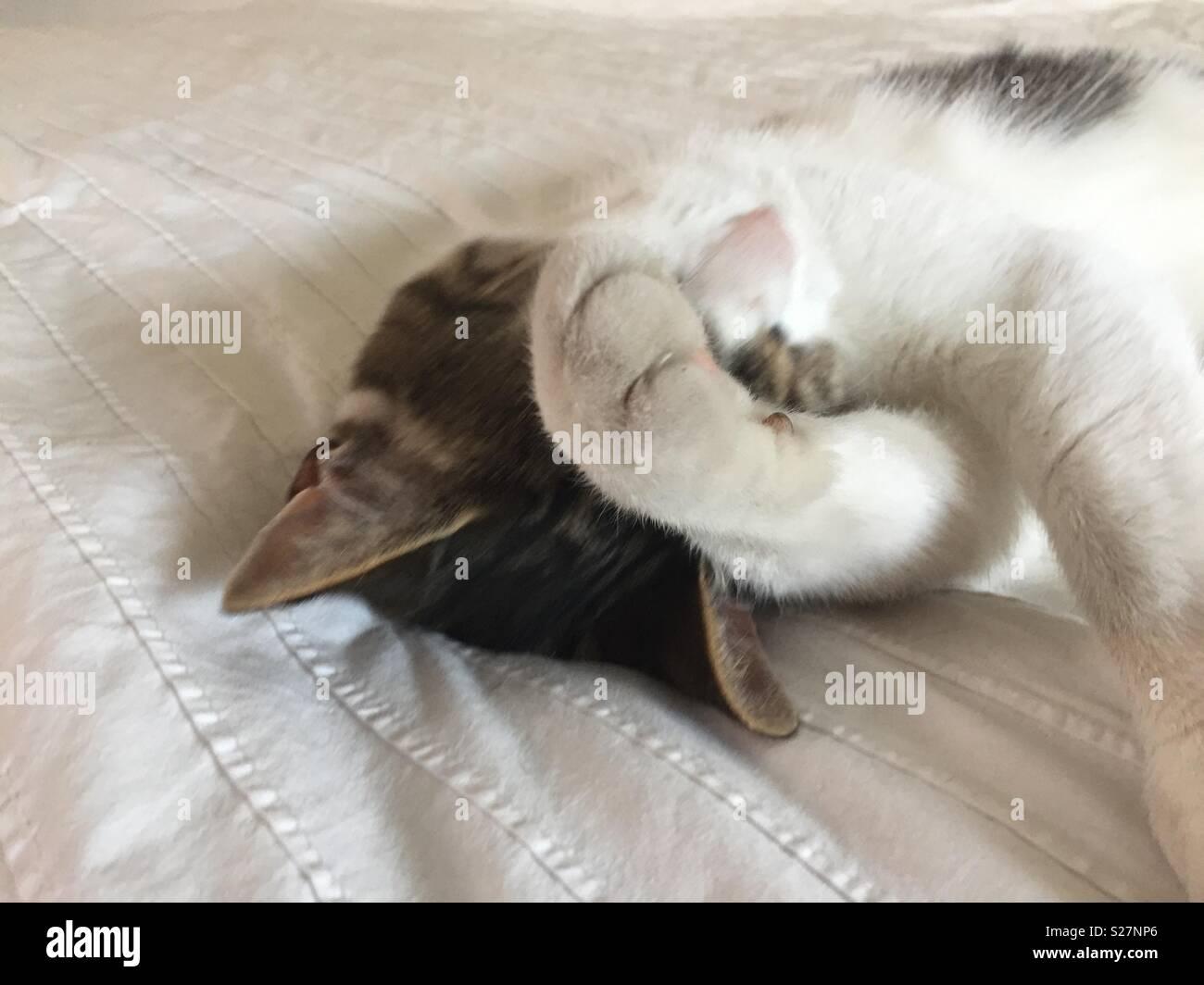 Peinlich cat Stockbild