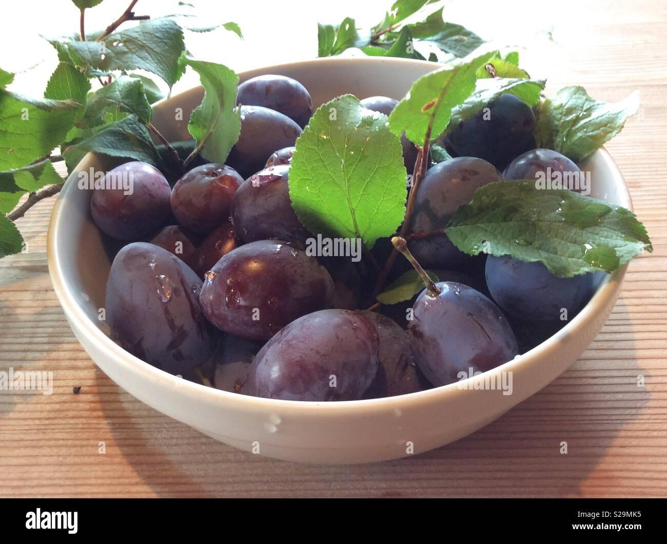 Frisch geernteten Pflaumen in Weiß Schüssel und Blätter von einem Pflaumenbaum Stockbild