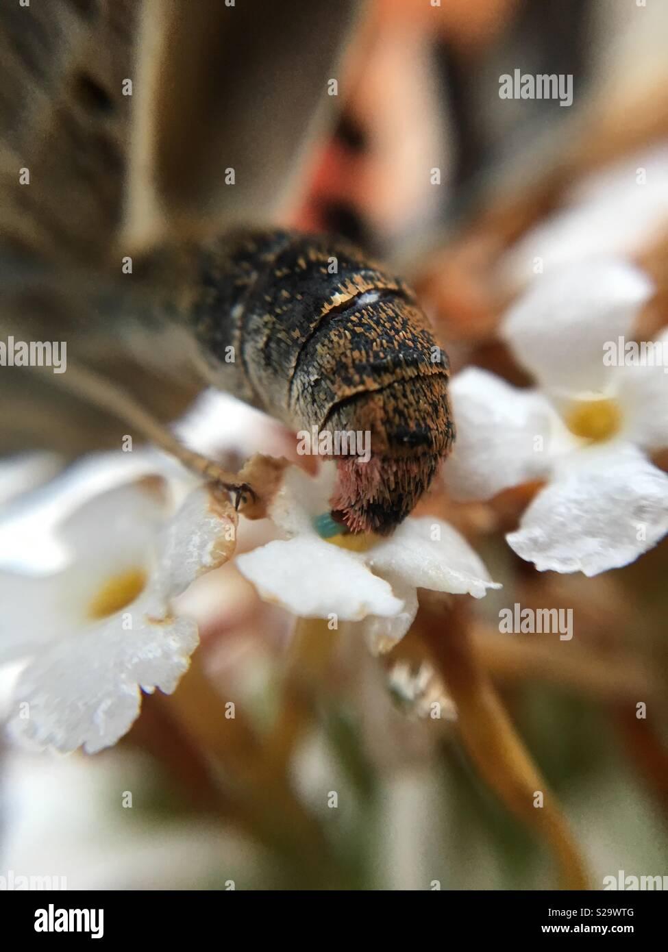 Lady butterfly Festlegung ei bemalt Stockbild