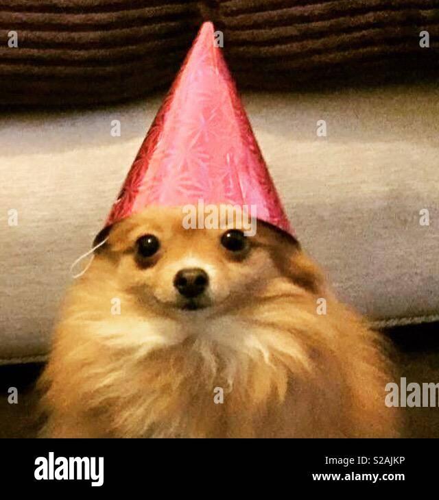 Feiern! Stockbild