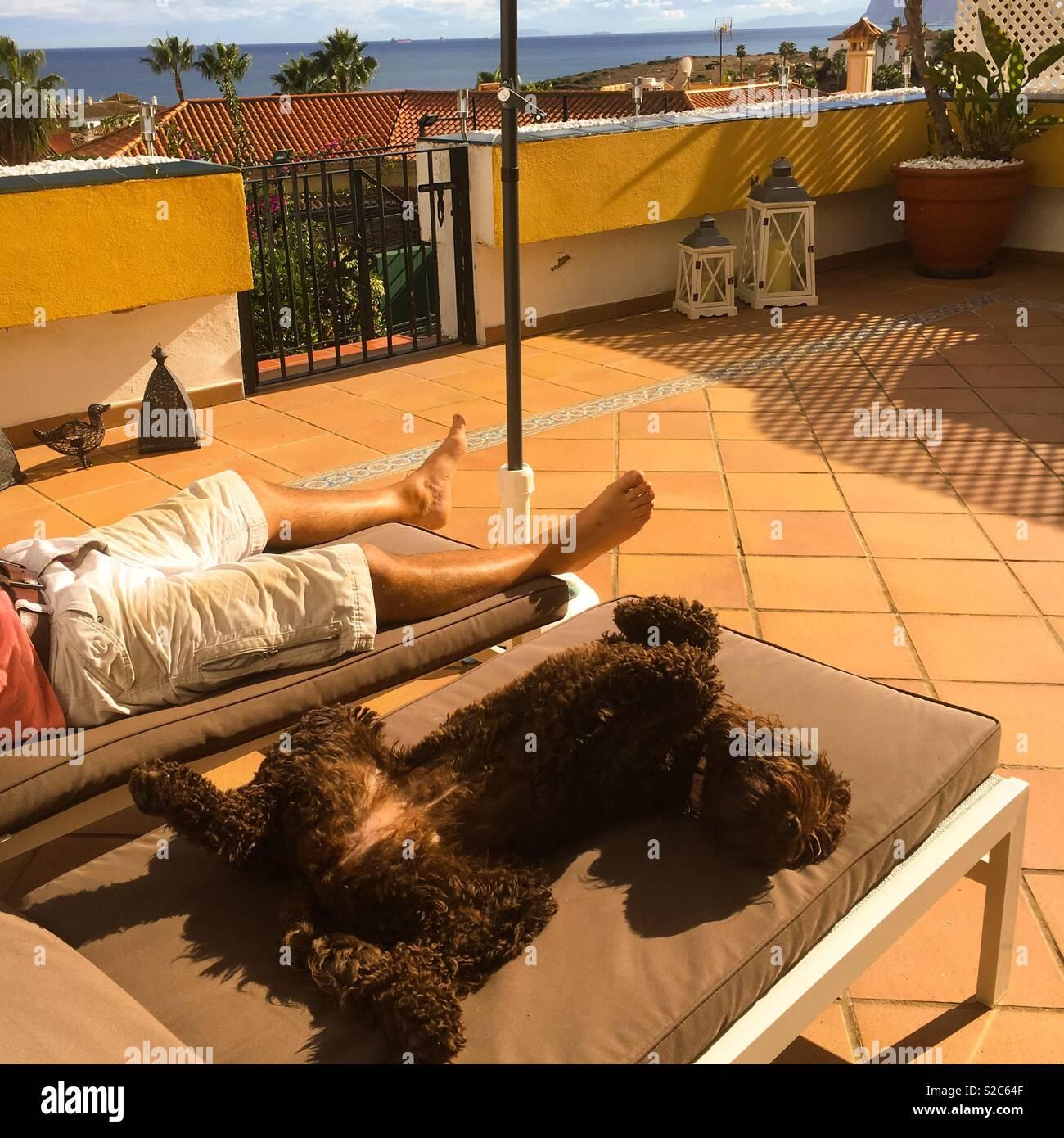 Zum Sonnenbaden Hund Stockfoto