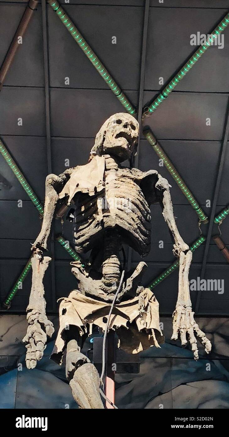 Zerlegen Skelett Stockbild
