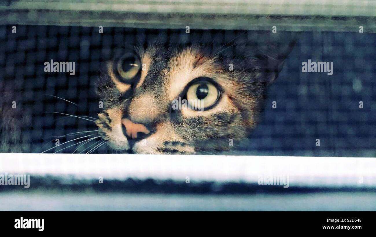 Die neugierige Katze links die Vögel beim Spielen außerhalb des Fensters zu sehen. Stockfoto