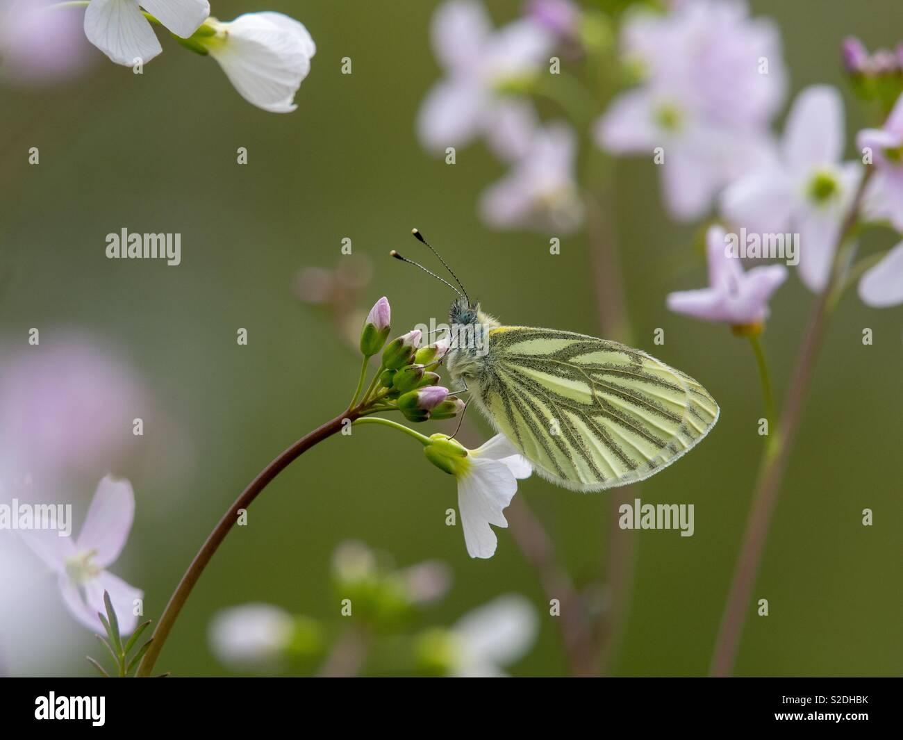 Schmetterling auf einem blühenden Blumen in einem Meer von Blüten Stockbild