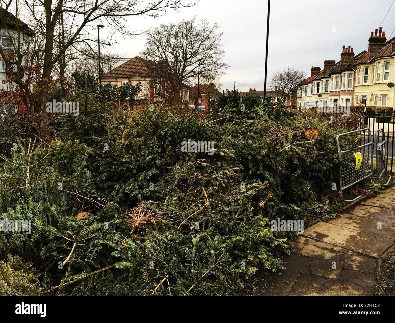 Weihnachtsbaum England.Weihnachtsbaum Aufbereitungsstelle In Mountsfield Park In Lewisham