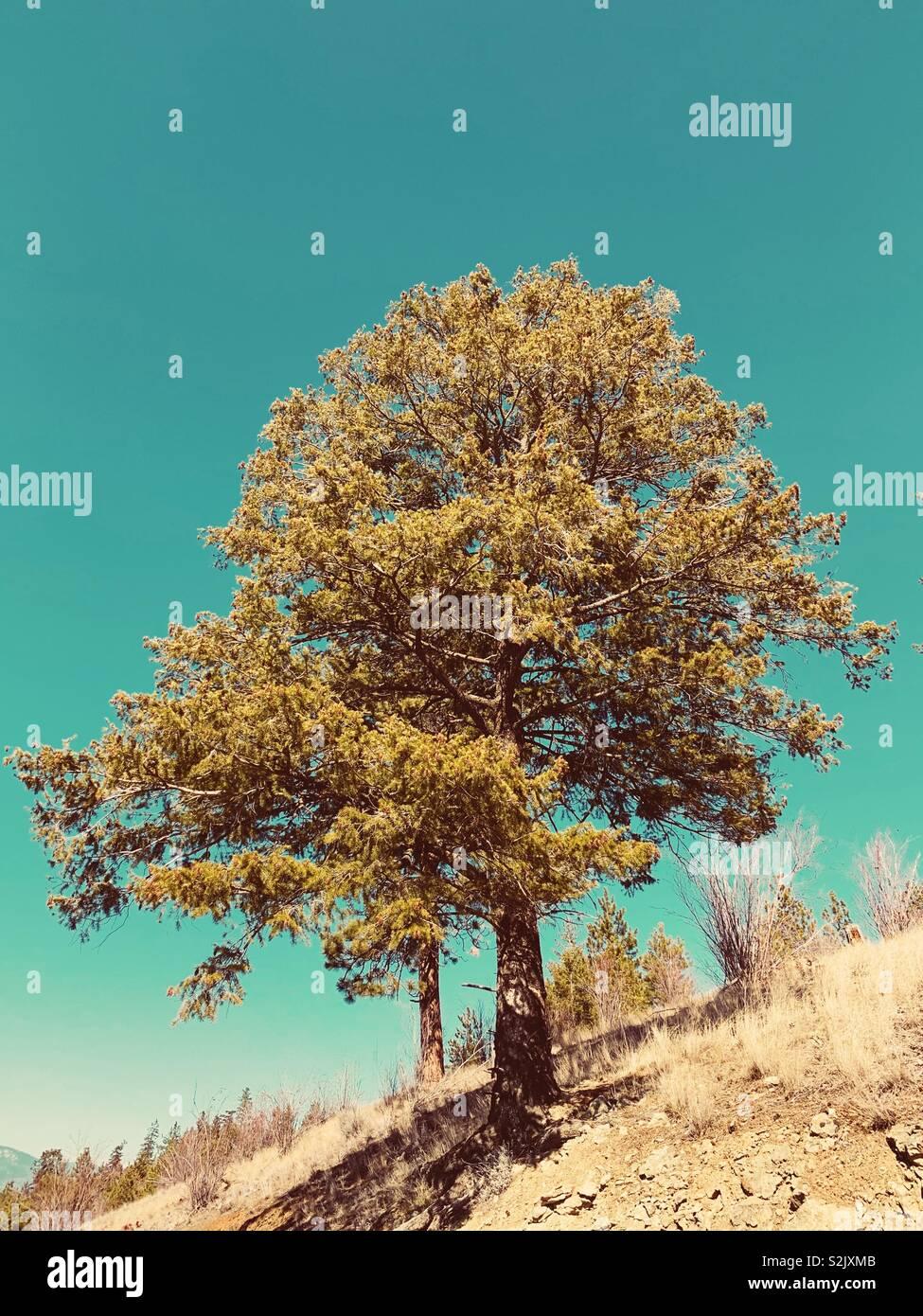 Baum auf einem Hügel mit einem blauen Himmel. Stockbild