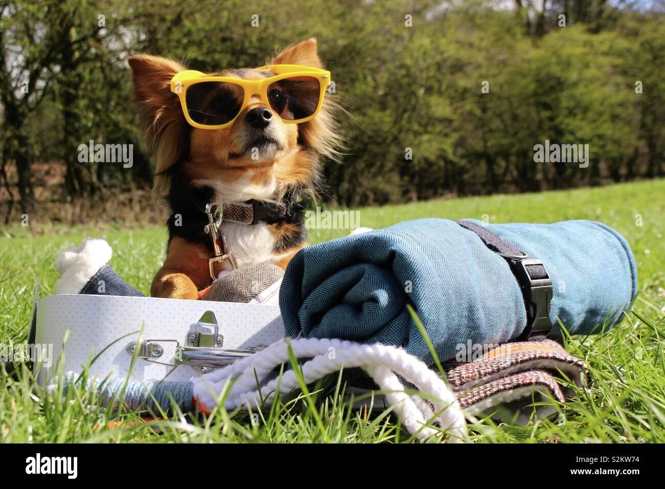 Sommer Hund mit Sonnenbrille und Koffer Stockfoto