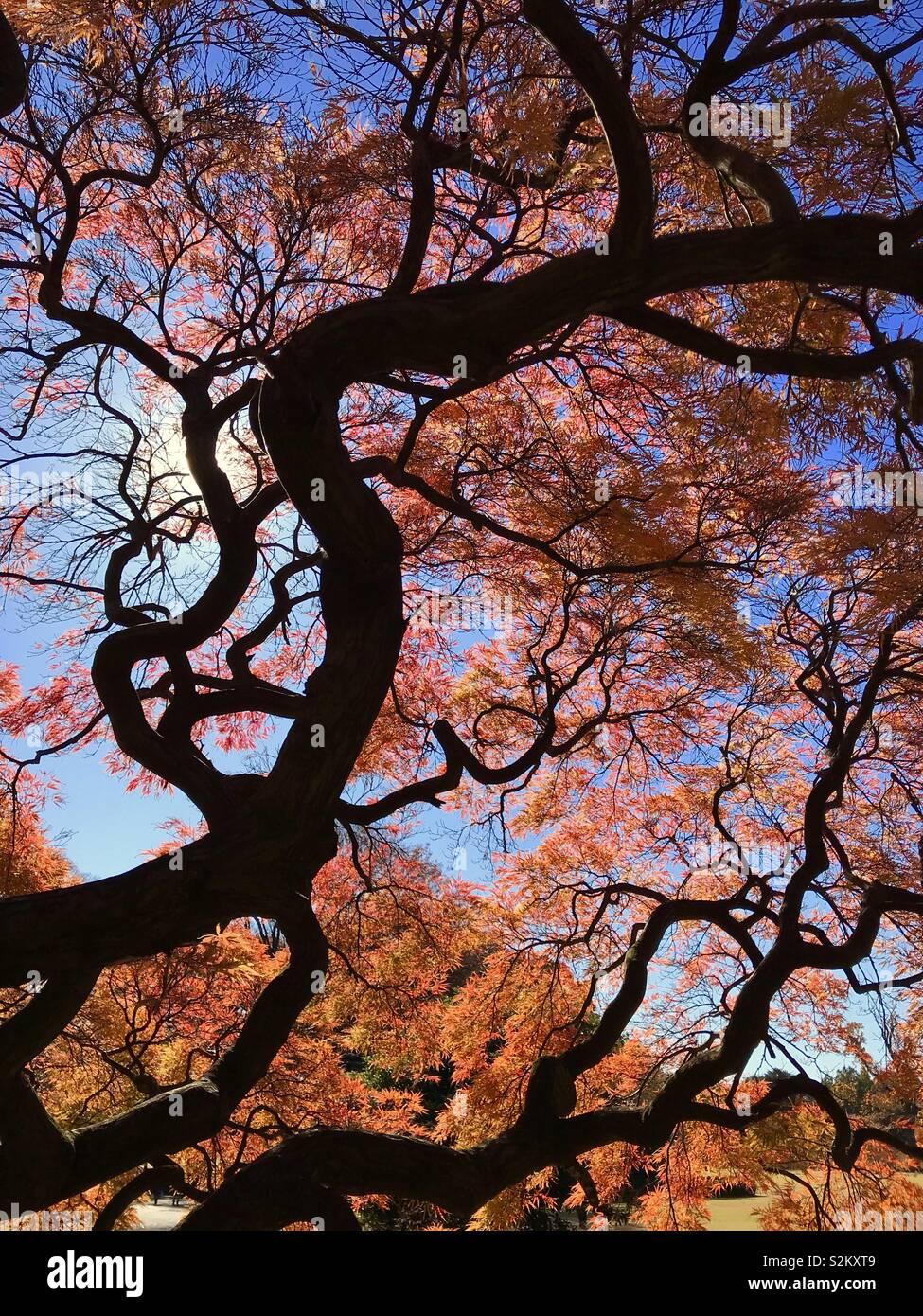 Tokio, Herbst Stockfoto