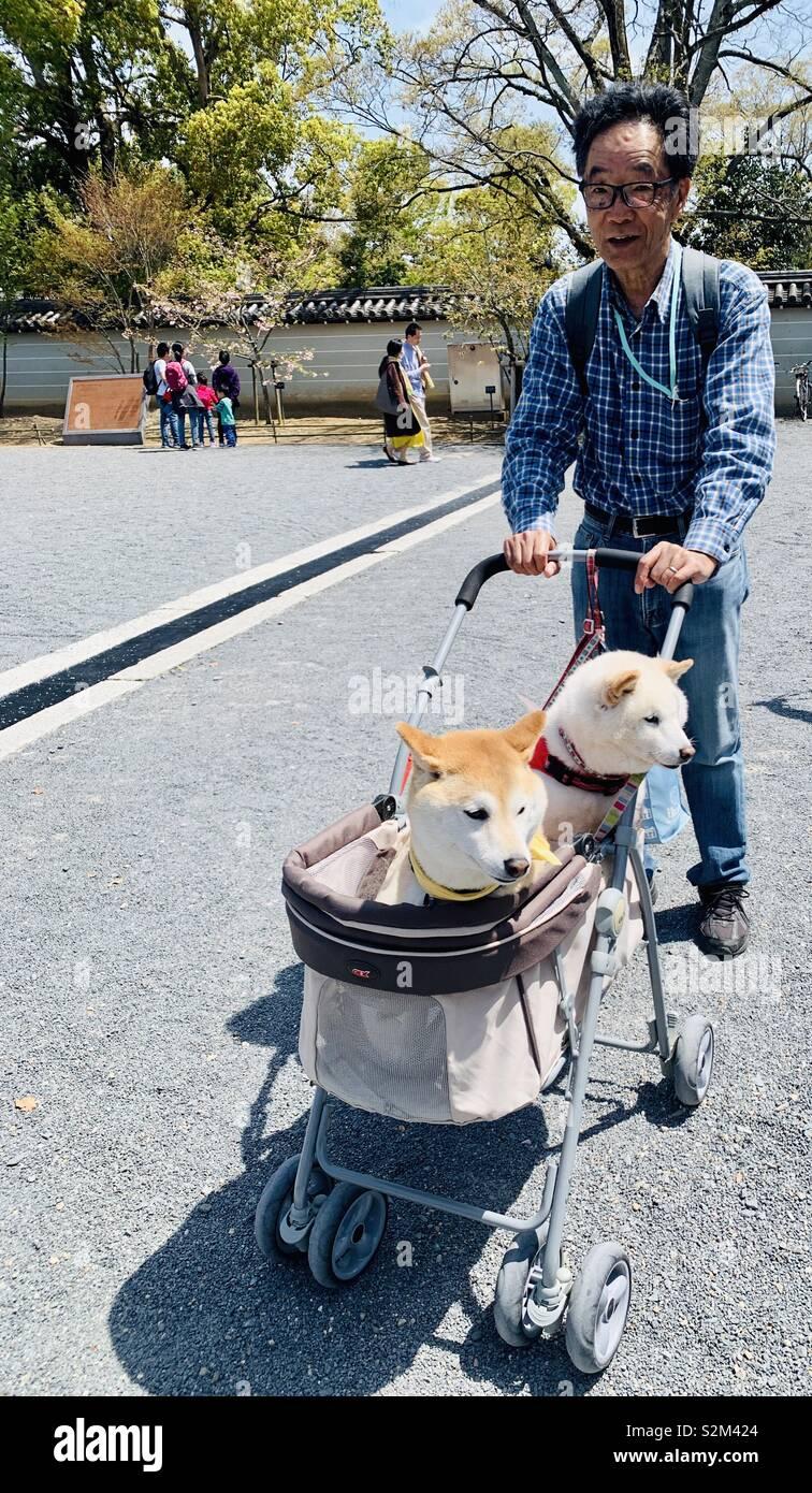 Ein Japaner Schieben eines Kinderwagens mit seinem Shiba Inu Hunde. Stockfoto
