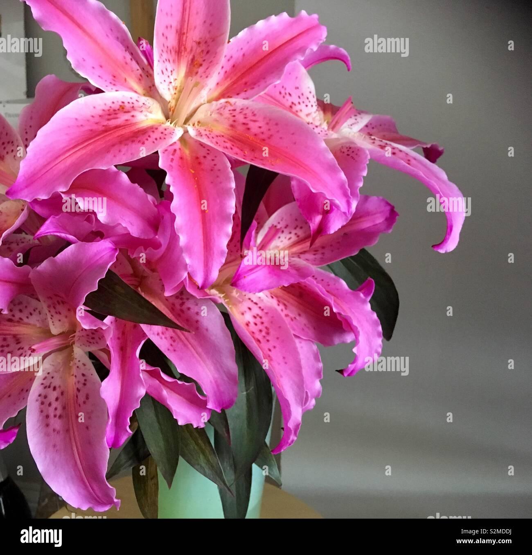 Ein Bündel von rosa Lilien in voller Blüte Stockbild