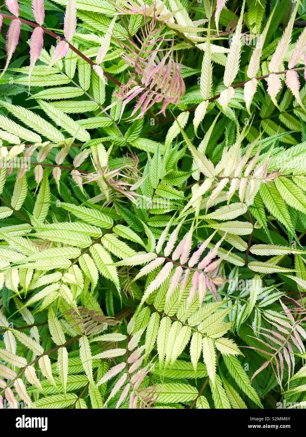 Vollbild Blätter Bild. Stockbild