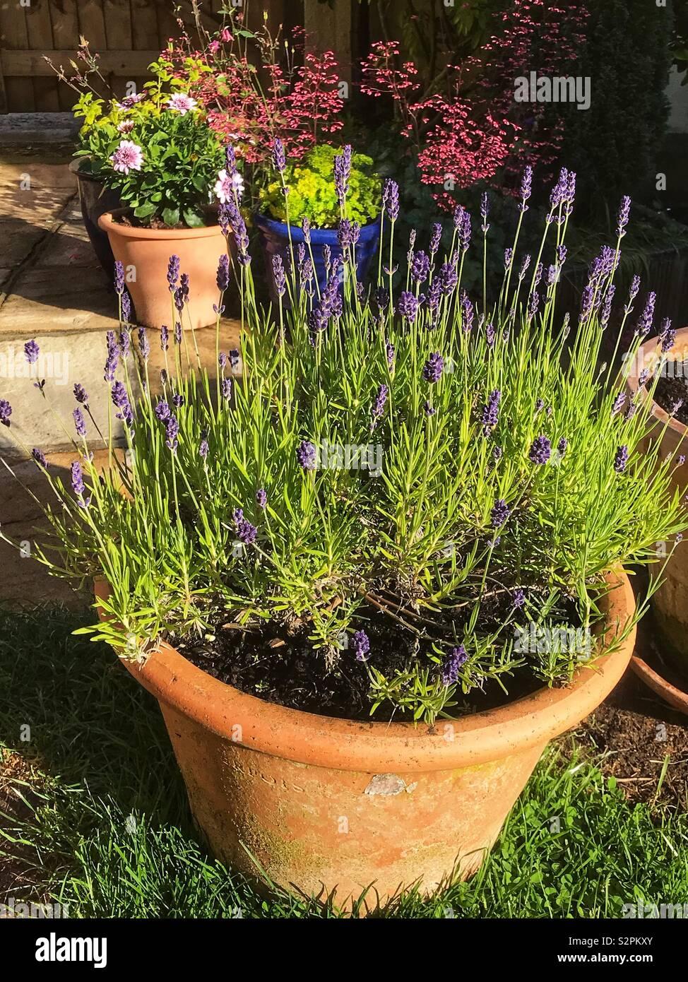 Behälter-Gartenarbeit Stockbild