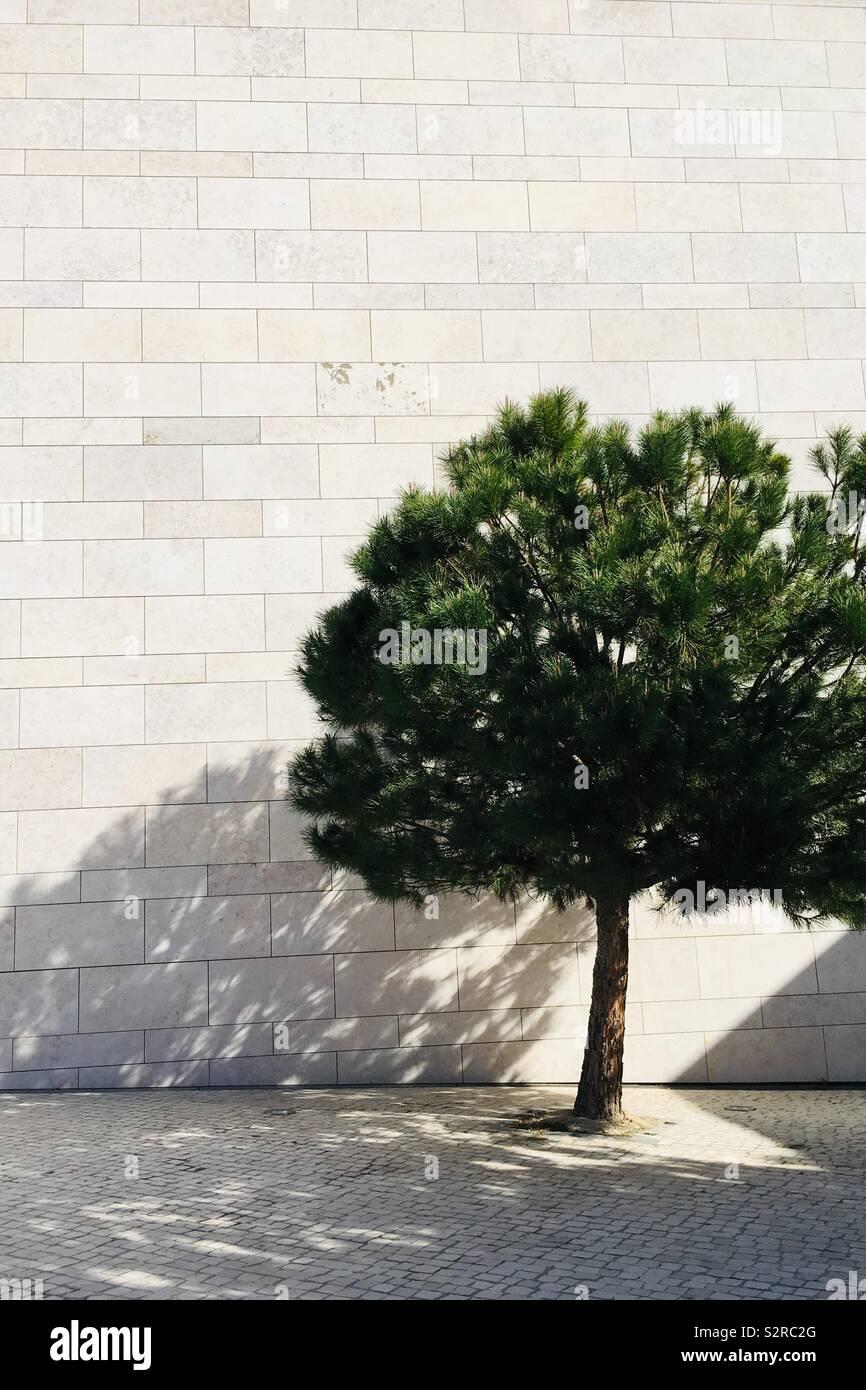 Einsamer Baum gegen eine Weiße gemauerte Wand in helles Licht. Stockfoto