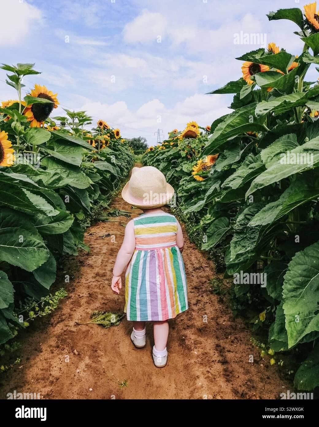 Kleine Mädchen zu Fuß in einem Feld mit Sonnenblumen Stockfoto