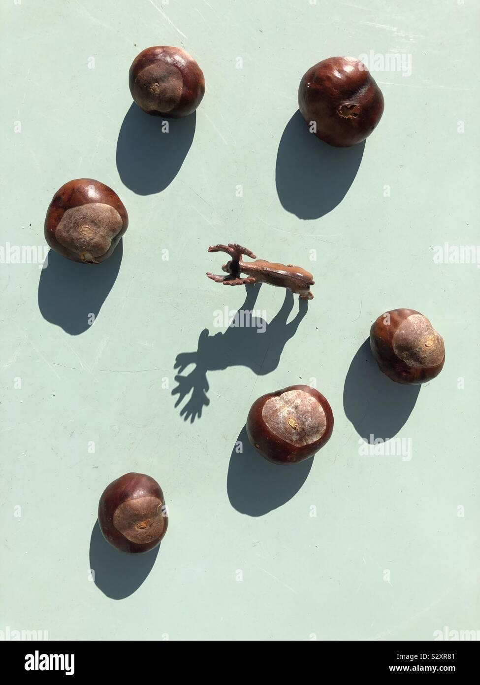 Herbst themed Bild von Kastanien conker und Schatten eines Spielzeugs Rotwild Stockfoto