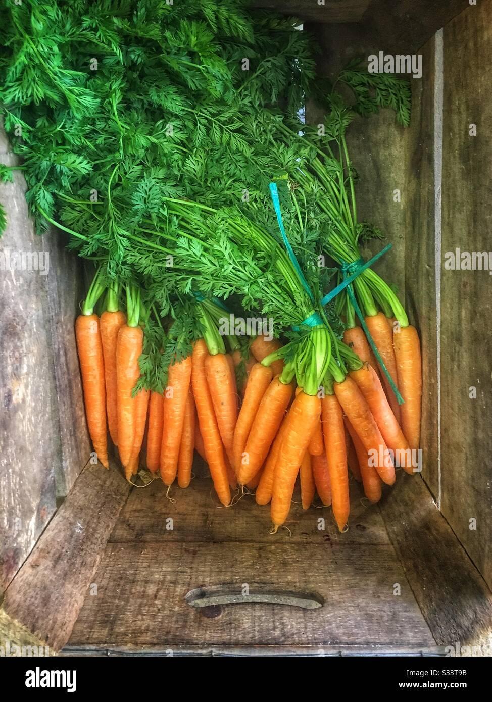 Top-down-Schuss frische Karotten, mit Oberteilen, in einer Holzkiste, zum Verkauf in einem Bauernladen. Stockfoto