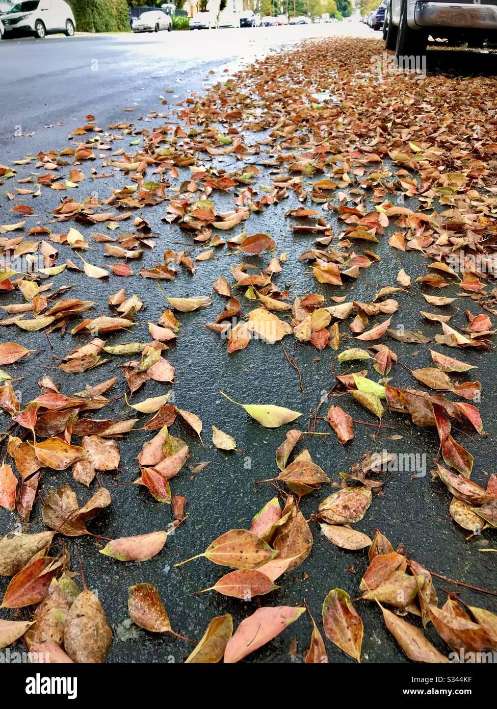 Verfallene Blätter an einem regnerischen Nachmittag. Stockfoto