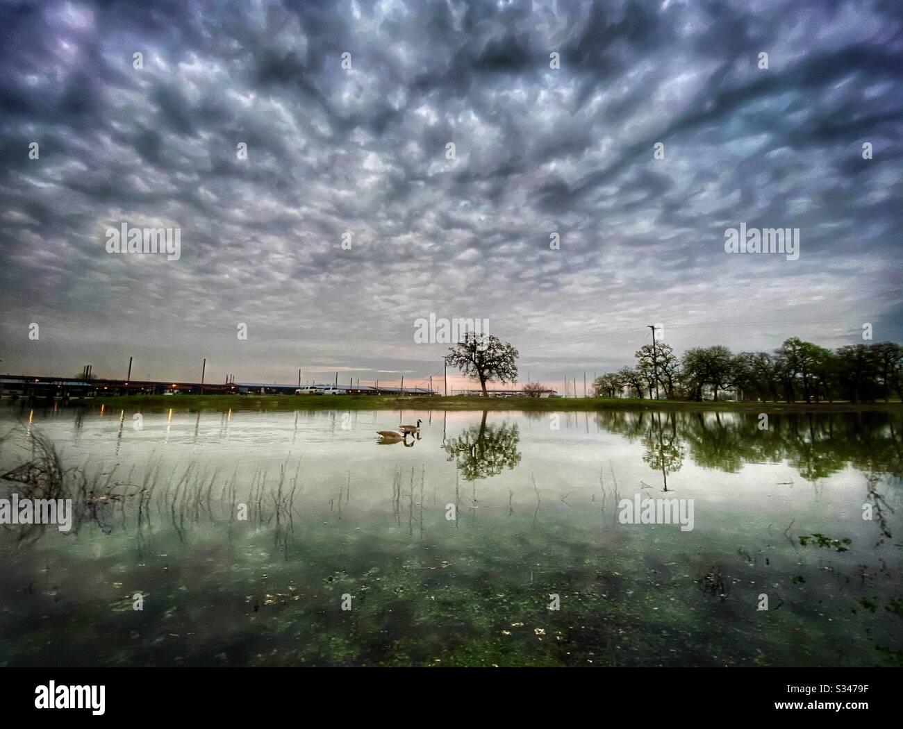 Lokale Wanderung am Jachthafen bei Sonnenuntergang, bei der die Gänse in den ruhigen Gewässern beobachtet werden, mit schön flauschigen Wolken über dem Kopf. Stockfoto