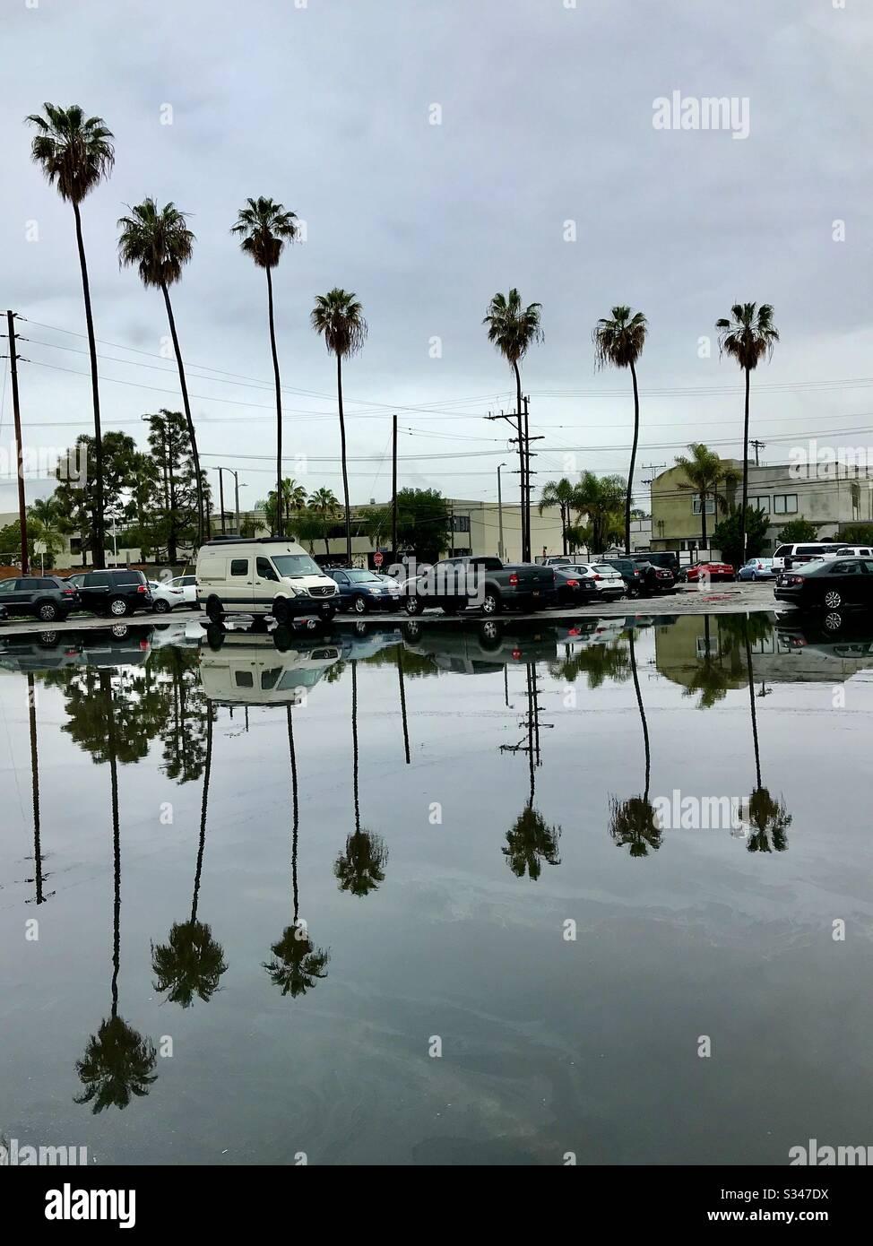 Palmen nach dem Regen. Stockfoto