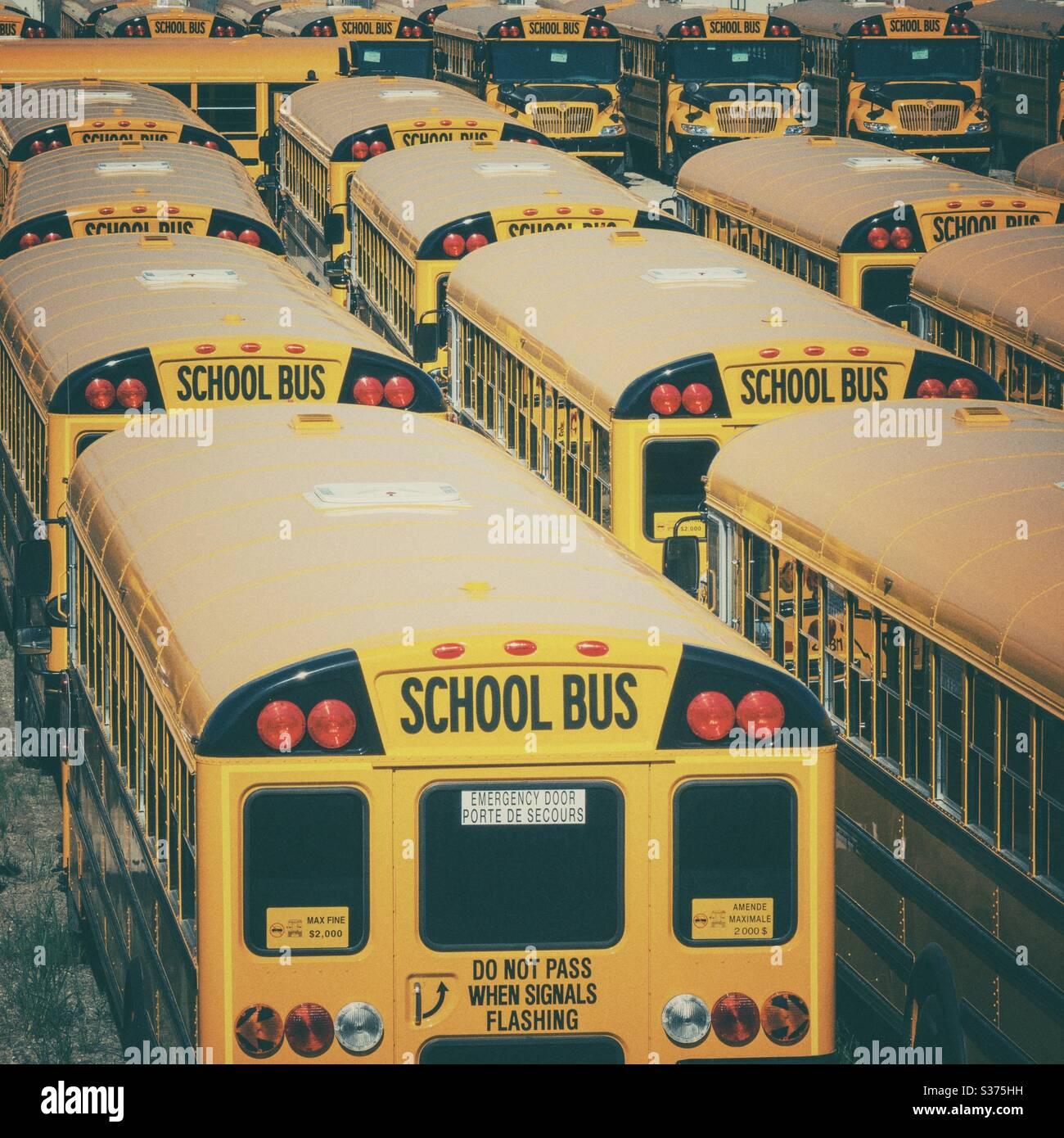 Gelbe nordamerikanische Schulbusse in EINEM Lagerhof Stockfoto