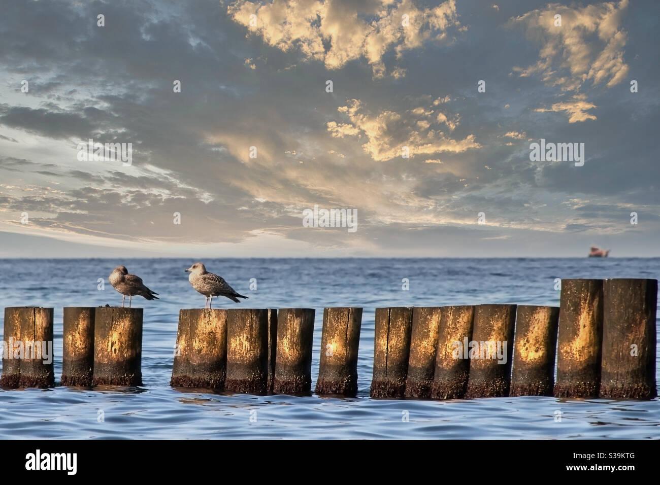 Zwei Möwen sitzen auf verwitterten Holzkisten davor Des Meeres mit einem unscharfen Segelschiff in der Hintergrund Stockfoto