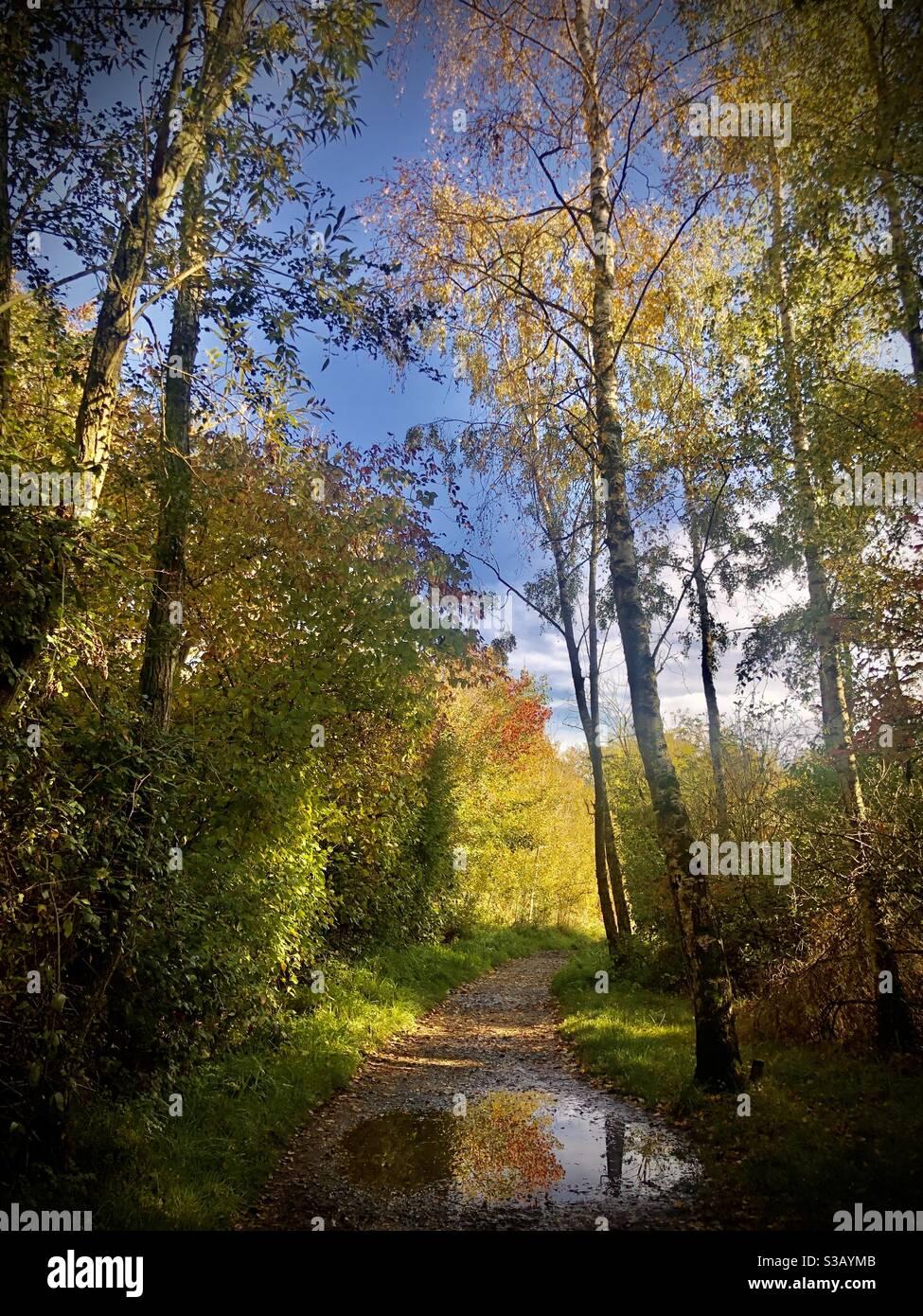 Herbstspaziergänge am Sonntagmorgen in Watermead Stockfoto