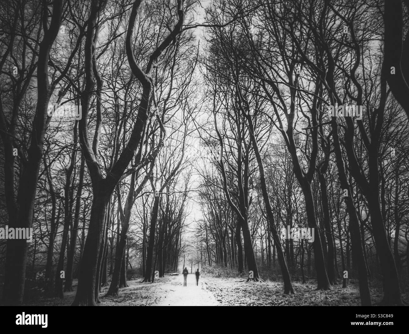 Zwei Personen, die in der Nähe von Chorley in Lancashire durch verschneiten Wald wandern. Stockfoto