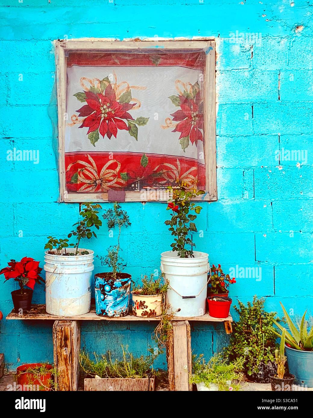 Pflanzen und Weihnachtsschmuck vor bescheidenen Haus in Mexiko Stockfoto