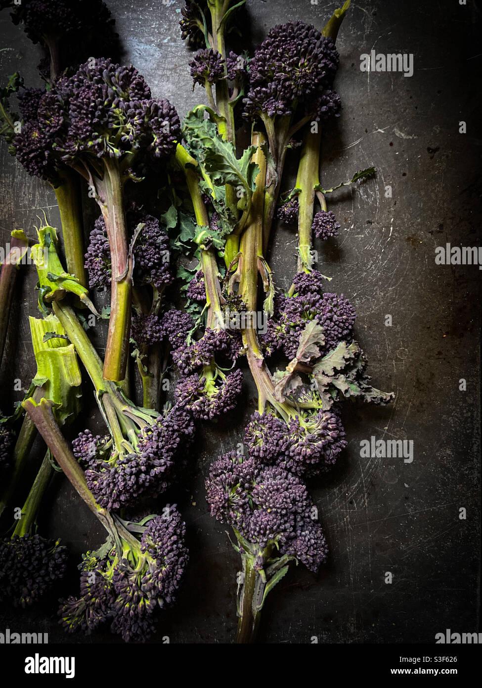Lila sprießender Brokkoli auf dunklem Hintergrund Stockfoto
