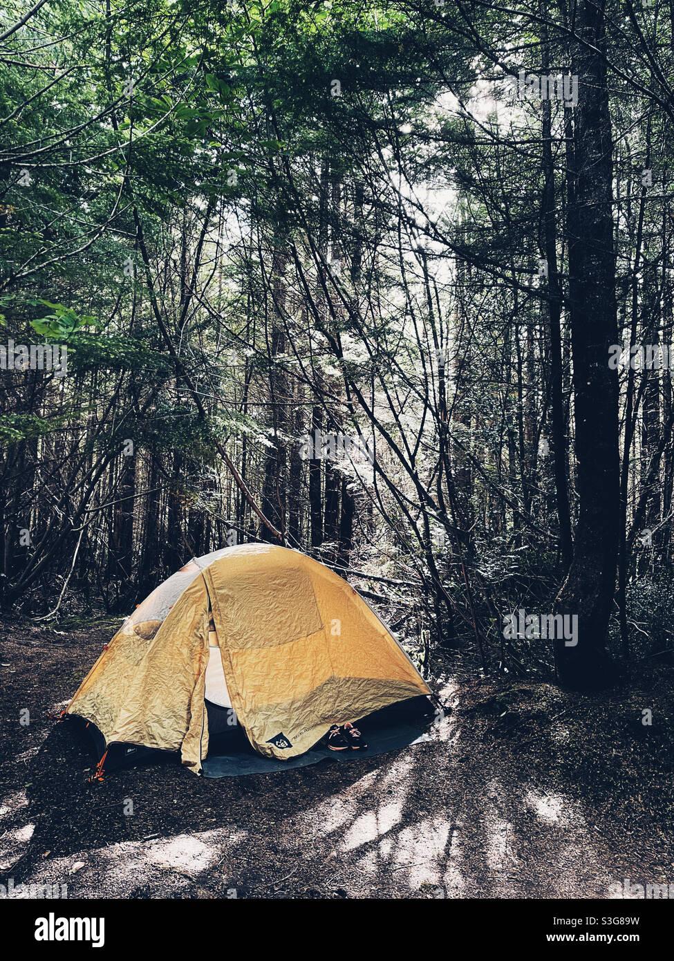 Zelten im Wald Stockfoto