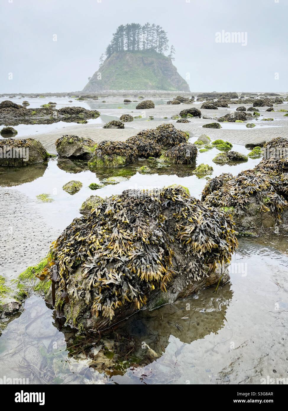 Tsakawahyah Island, Cape Alava, olympischer Nationalpark Stockfoto