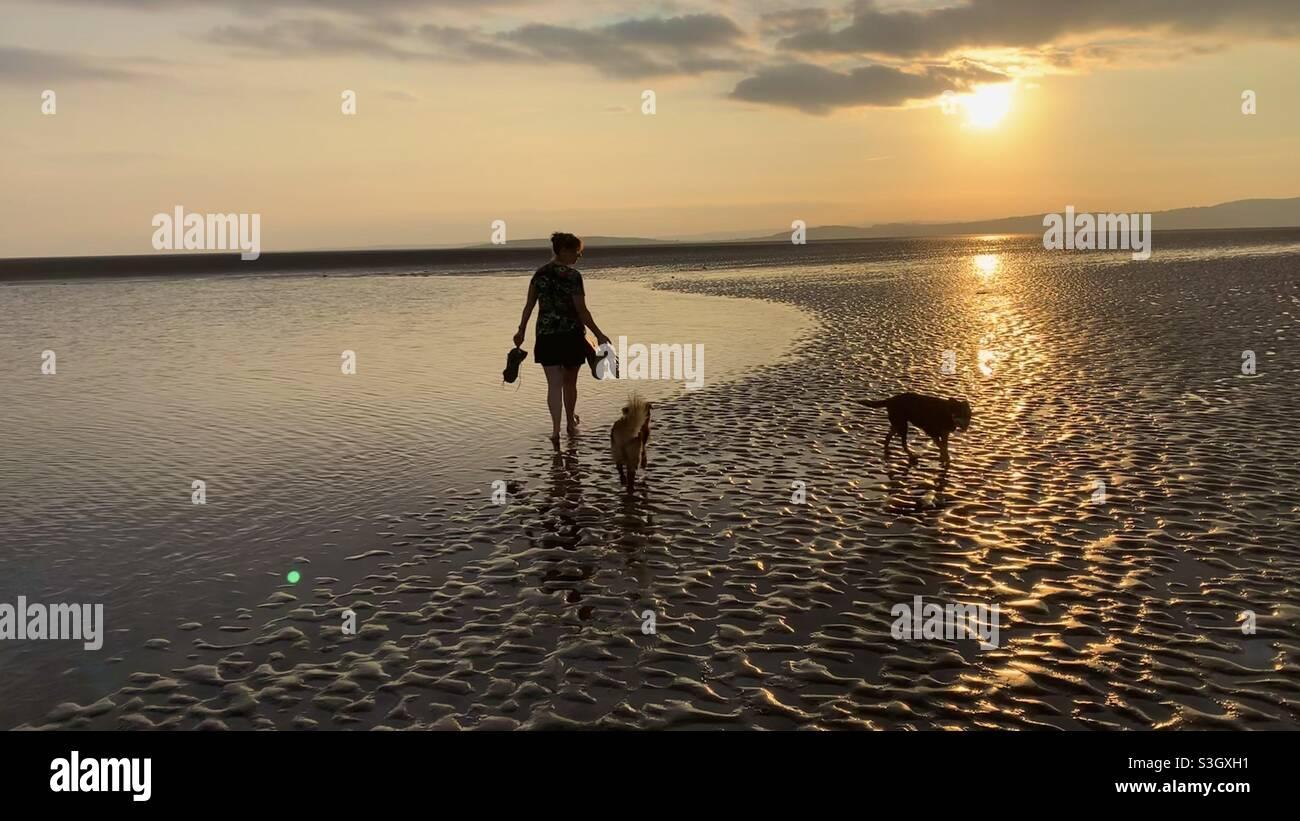 Frau machte bei Sonnenuntergang eine Silhouette beim Spazierengehen mit ihren Hunden am Strand Stockfoto