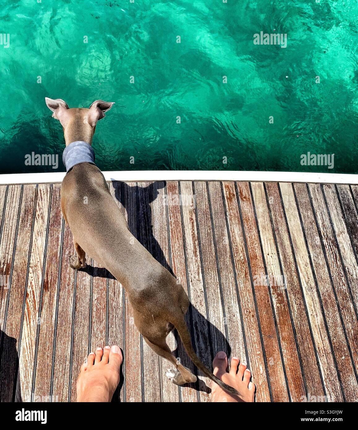 Auf einer Holzterrasse am Meer mit einem italienischen Windhund Stockfoto