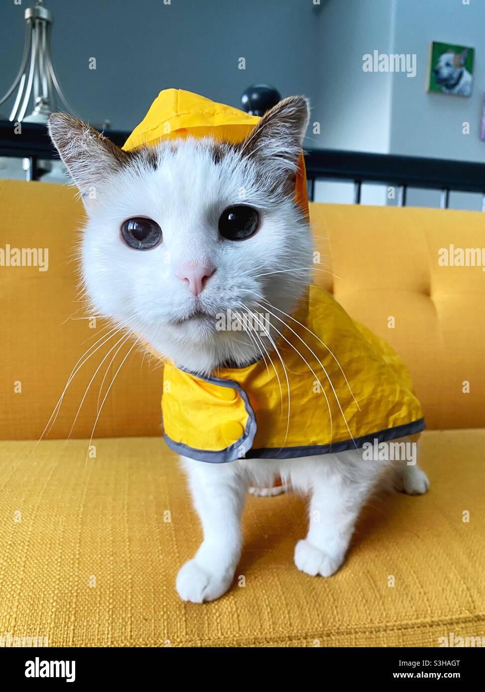 Eine Katze, die einen gelben Regenmantel trägt. Stockfoto