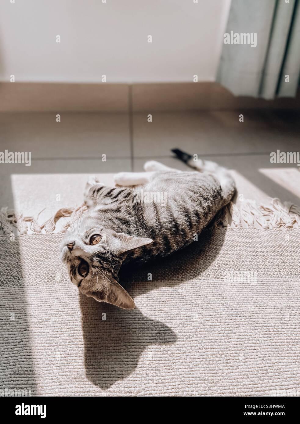 Katze, die auf einem Teppich in der Sonne liegt und einen Schatten erzeugt Stockfoto