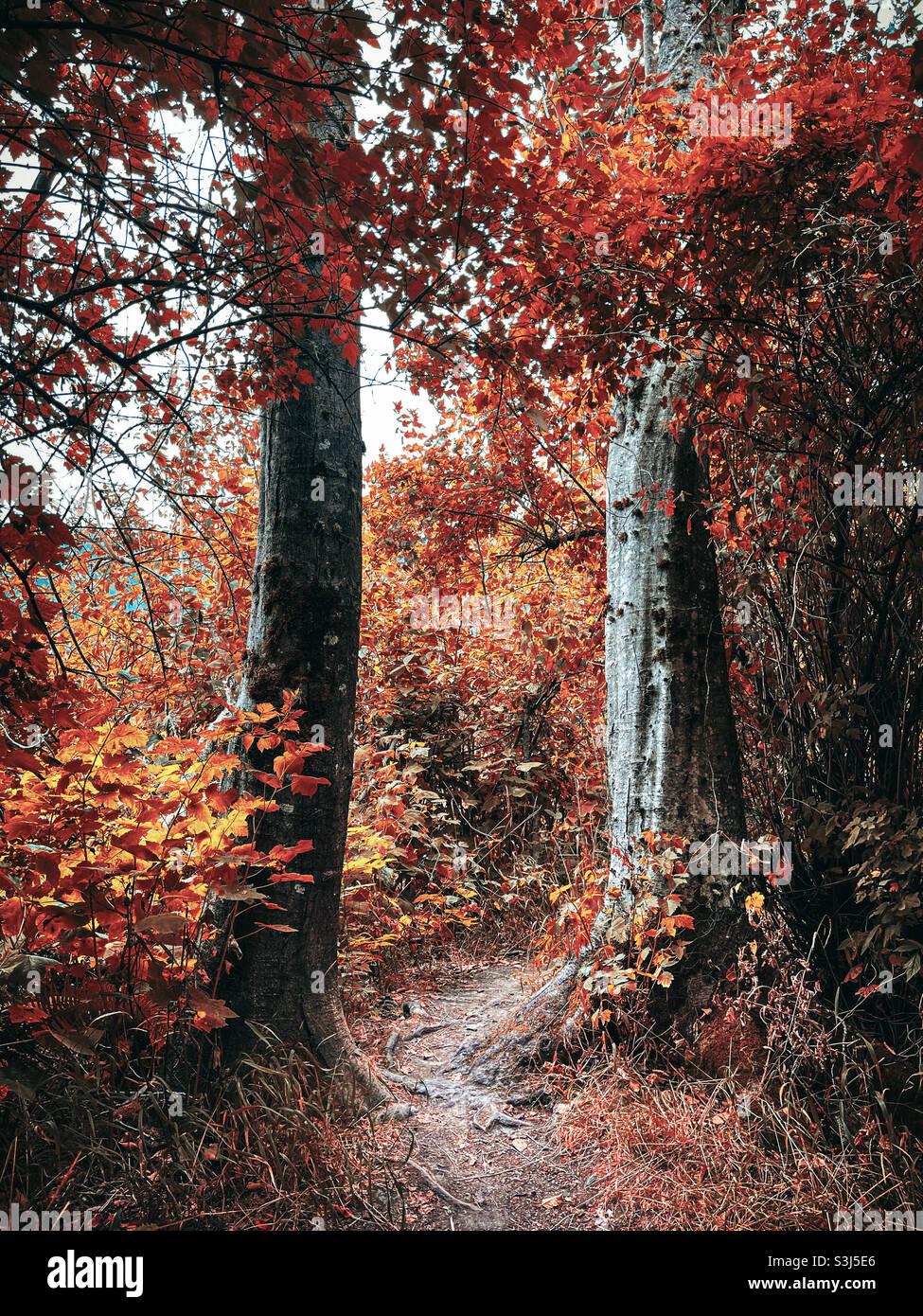 Herbst-Weg Stockfoto