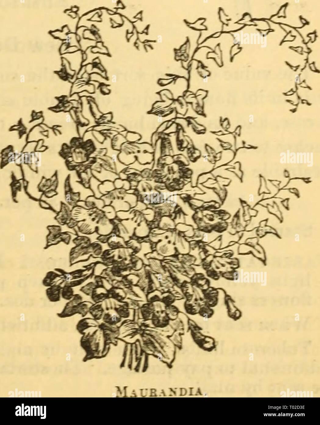 Dreers Garten Kalender 1879 Dreersgardencale 1879 Henr Jahr 1879