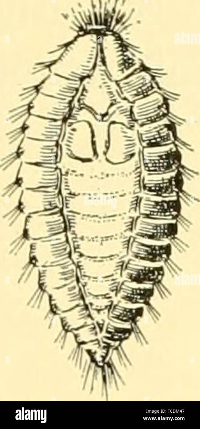 Elementare Biologie; eine Einführung in die elementare Biologie; eine Einführung in die Wissenschaft des Lebens elementarybiolog 00 grue Jahr: 1924 Stockfoto