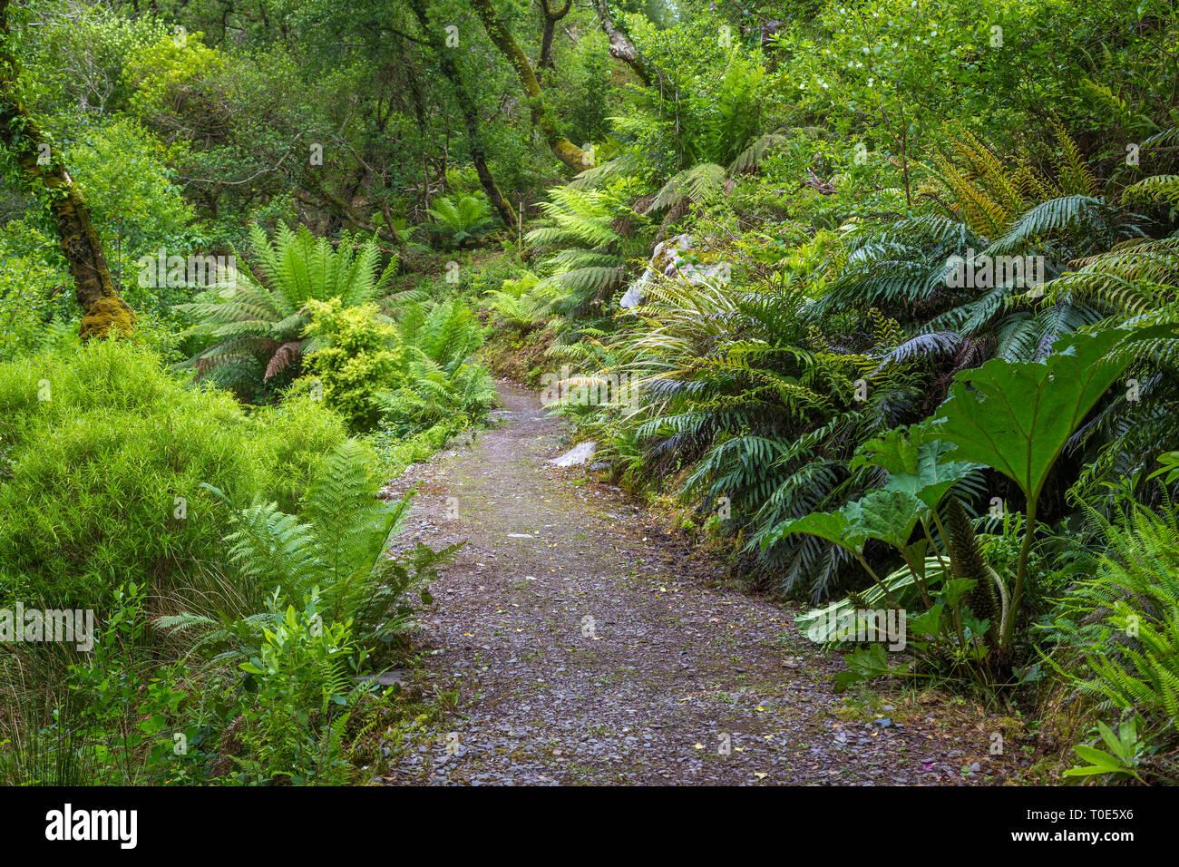 Zu Fuß durch Kells Gärten am Ring of Kerry, Irland Stockbild