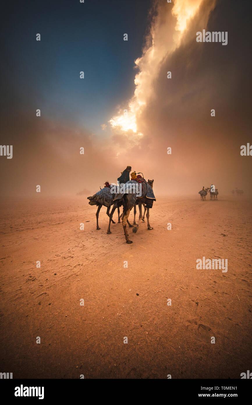 Kamelrennen in Saudi-Arabien Stockfoto